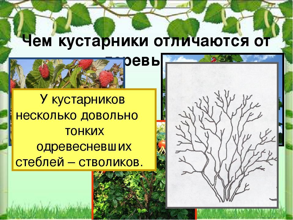 картинки для презентации деревья и кустарники три года они