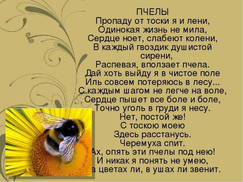 ПЧЕЛЫ Пропаду от тоски я и лени, Одинокая жизнь не мила, Сердце ноет, слабеют...