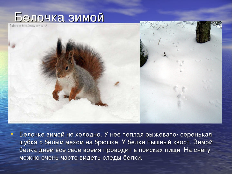 стихи белочка зимой вниманию предлагается