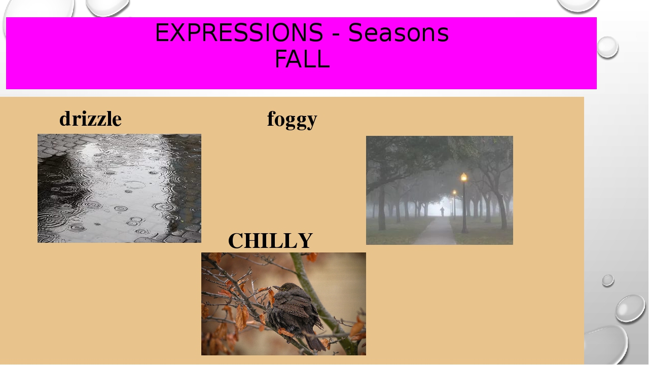 EXPRESSIONS - Seasons FALL drizzle					 foggy CHILLY