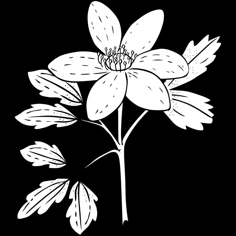 картинки для раскрашивания цветок жасмин запросу