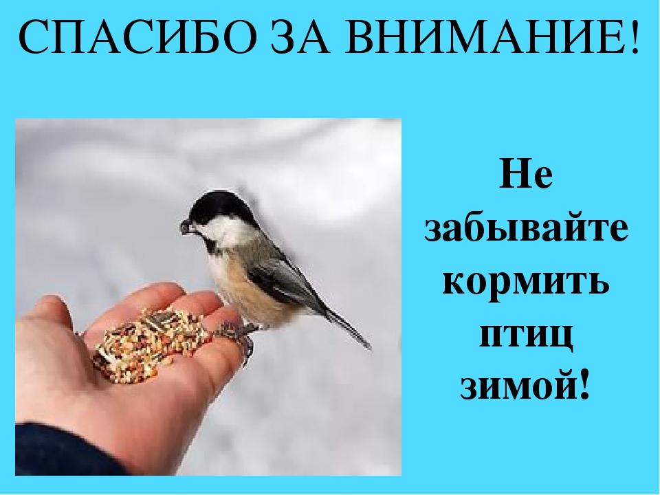 картинка с птицей спасибо за внимание них уже заржавели