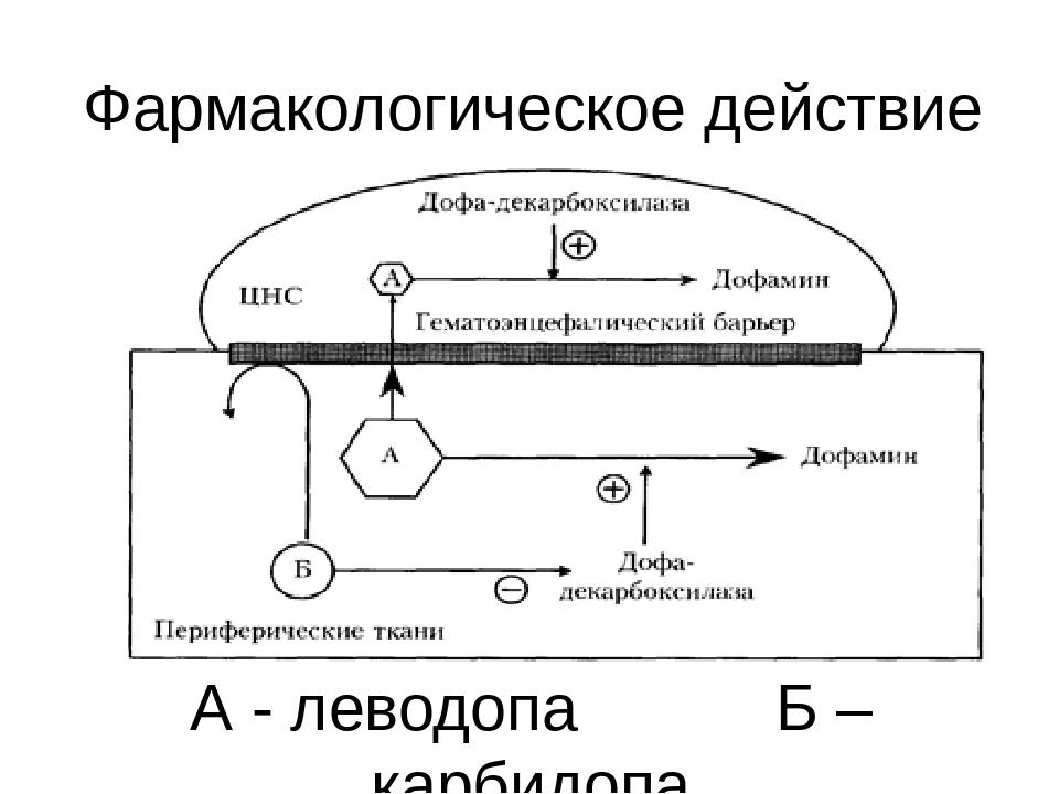 А - леводопа Б – карбидопа Фармакологическое действие