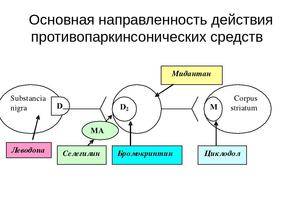 Основная направленность действия противопаркинсонических средств Полоса́тое...