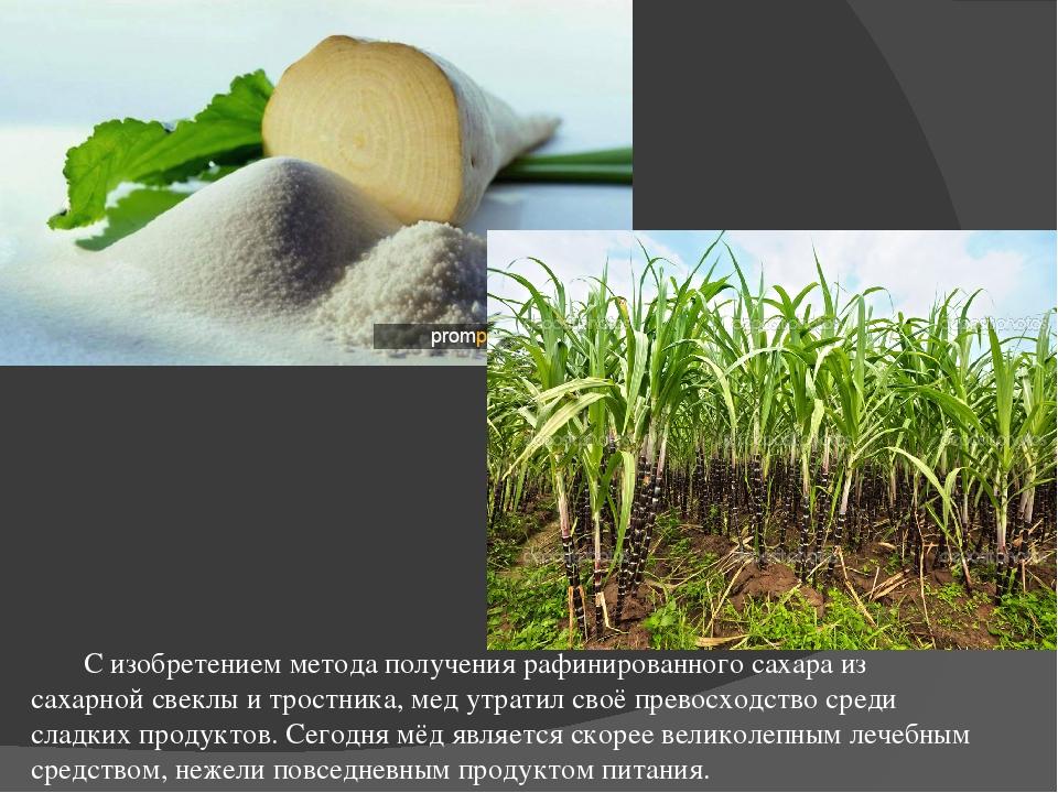 Сахарная свекла и сахарный тростник в картинках