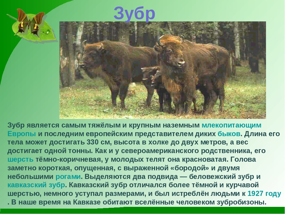 фото и описание животного россии коттеджном поселке