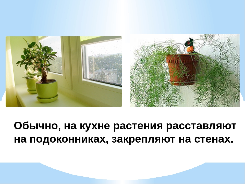 Обычно, на кухне растения расставляют на подоконниках, закрепляют на стенах.