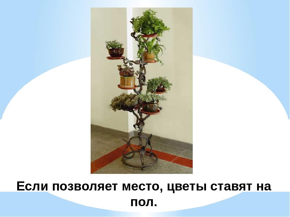 Если позволяет место, цветы ставят на пол.