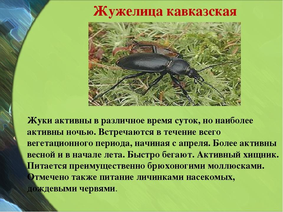 Жужелица кавказская Жуки активны в различное время суток, но наиболее активны...