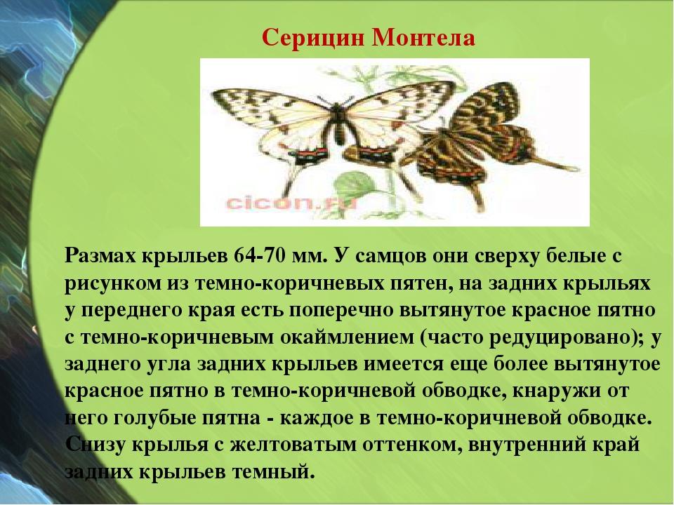 Размах крыльев 64-70 мм. У самцов они сверху белые с рисунком из темно-коричн...