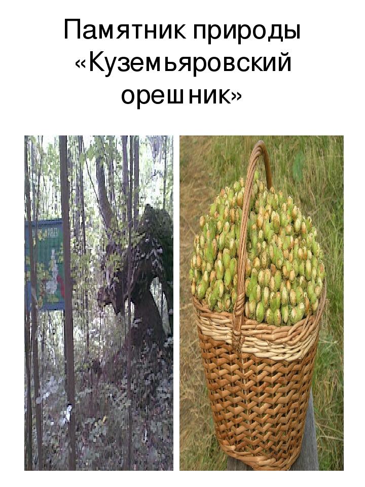 Памятник природы «Куземьяровский орешник»