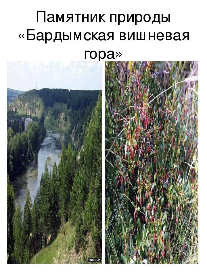 Памятник природы «Бардымская вишневая гора»