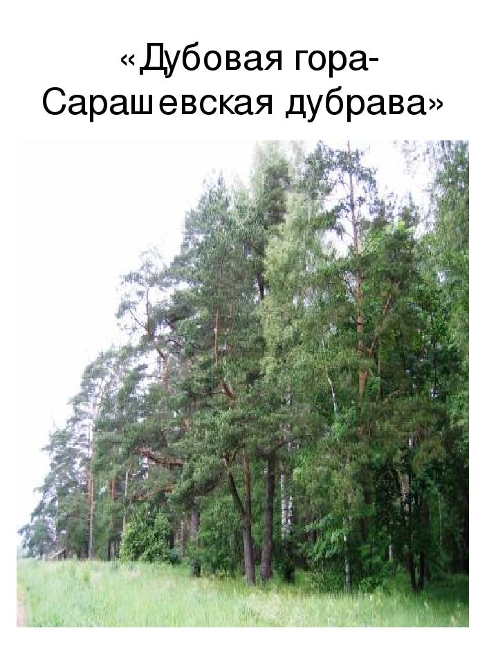 «Дубовая гора- Сарашевская дубрава»