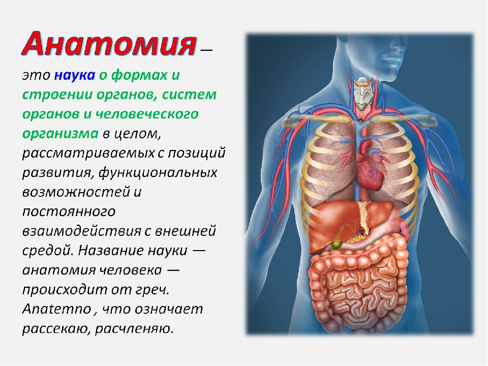 anatomy physiology Test your knowledge in anatomy and physiology to prepare for the cma (aama) certification exam offered by the american association of medical assistants.