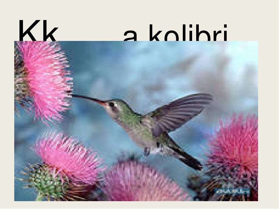 Kk a kolibri