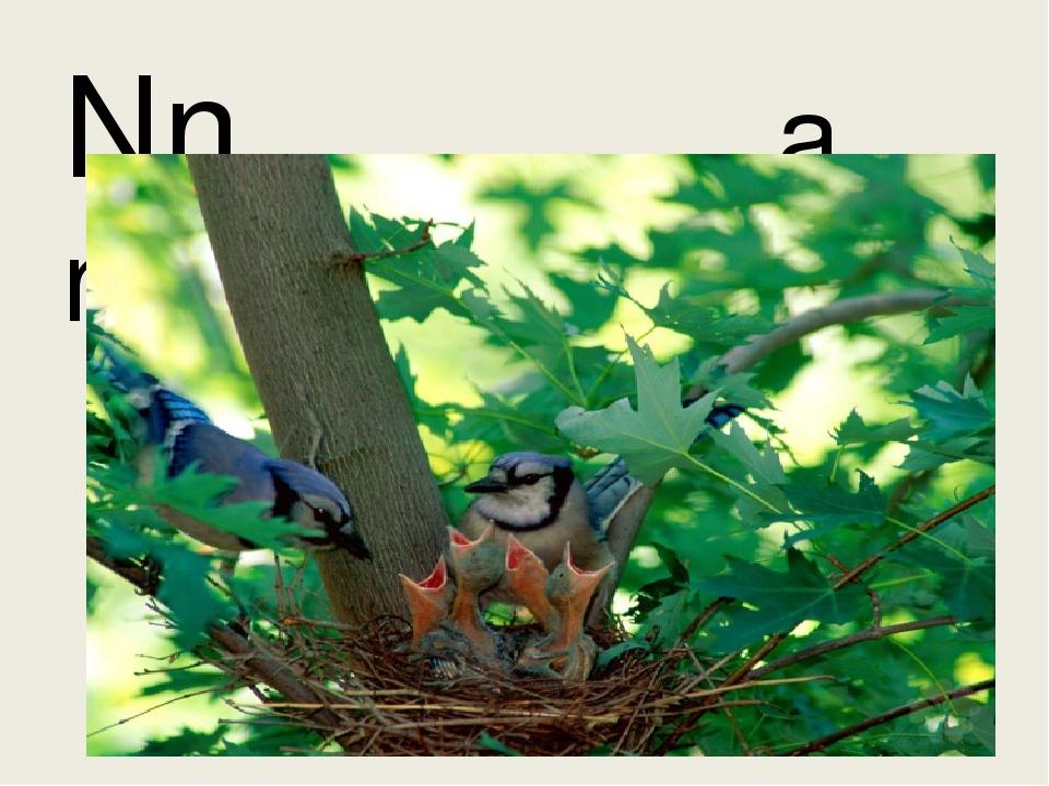 Nn a nest