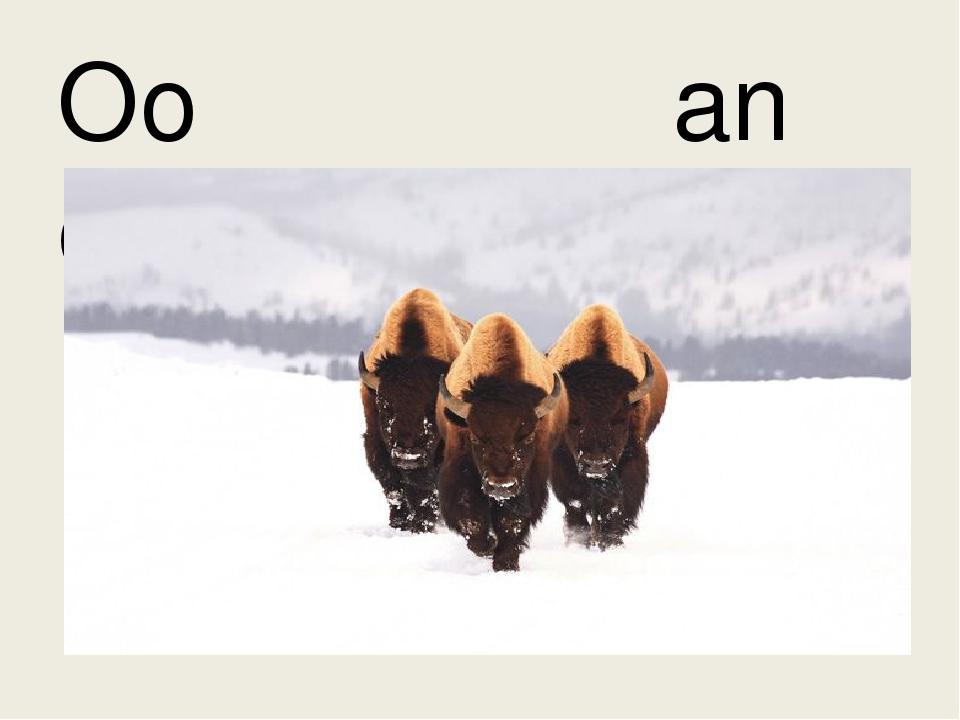 Oo an ox