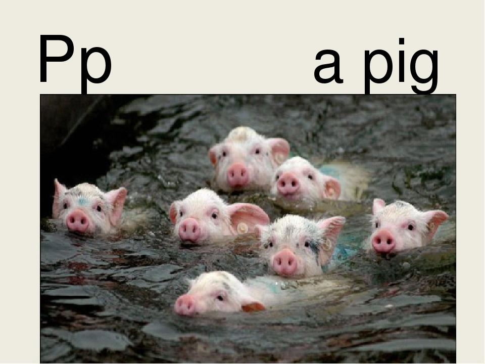 Pp a pig
