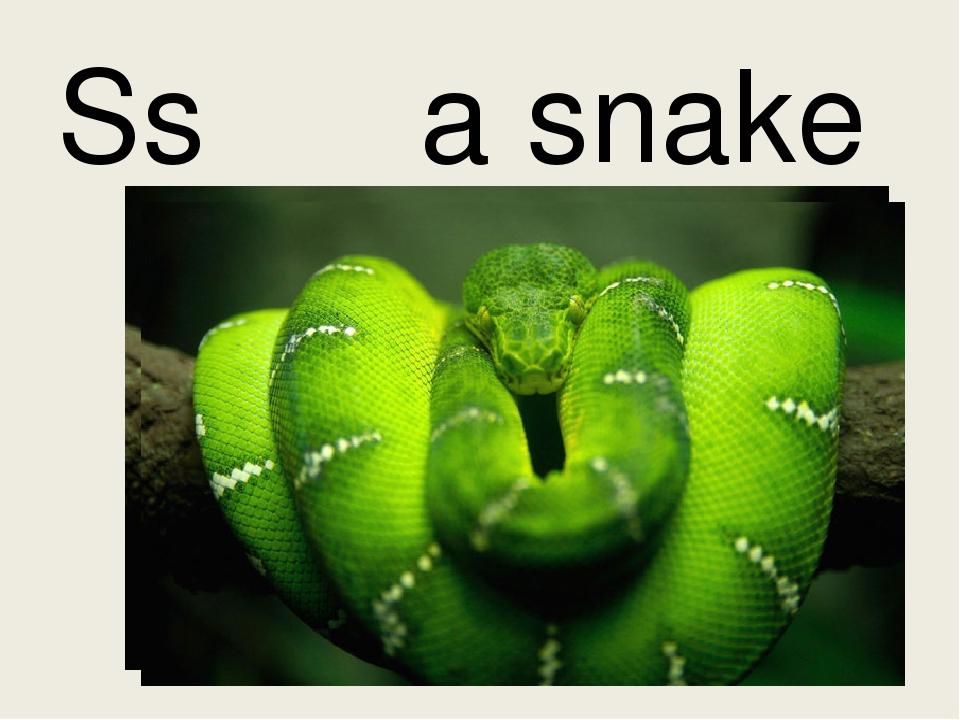 Ss a snake