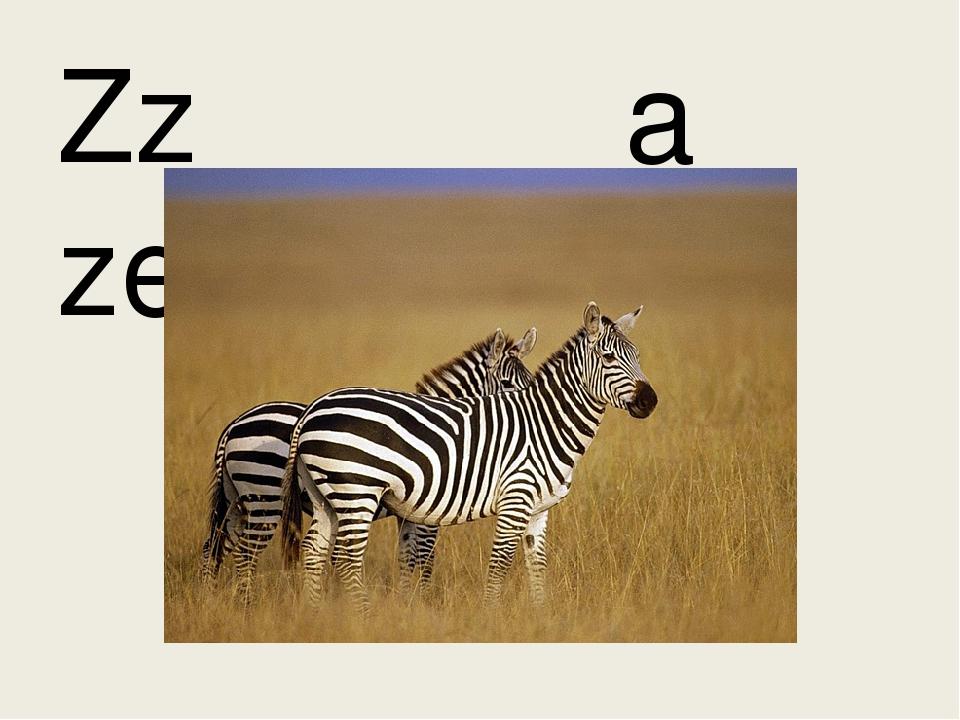 Zz a zebra
