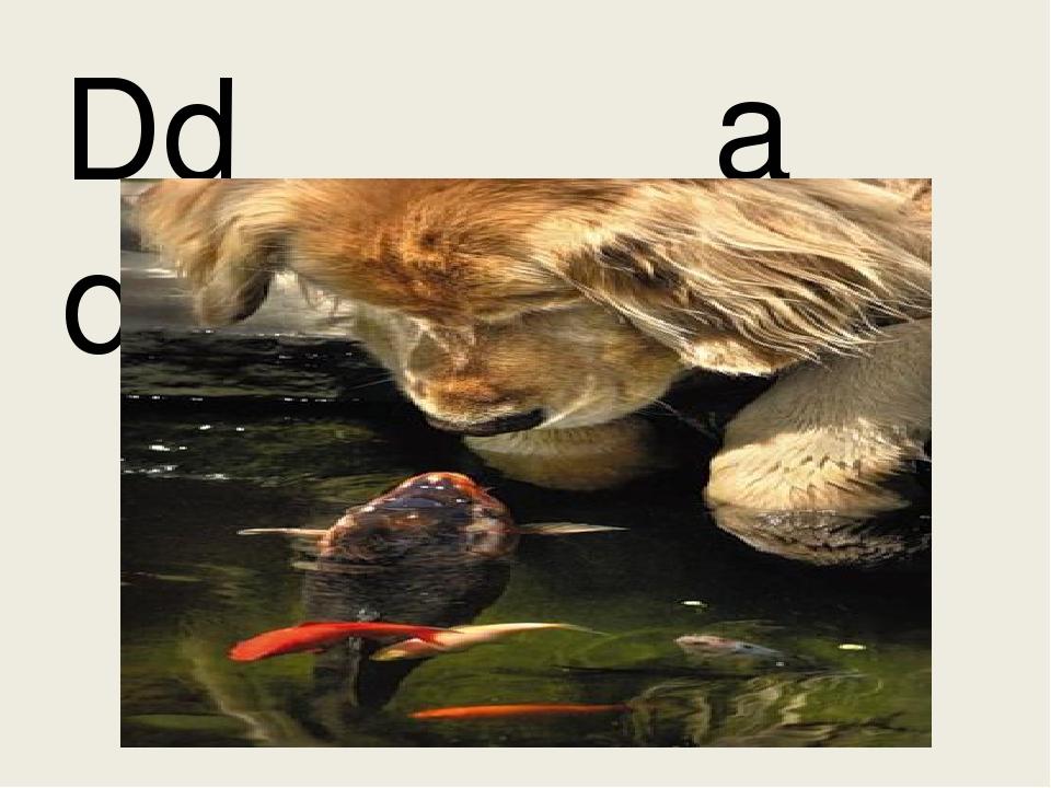 Dd a dog