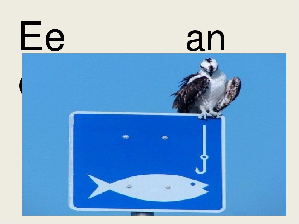 Ee an eagle