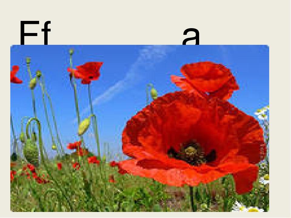 Ff a flower