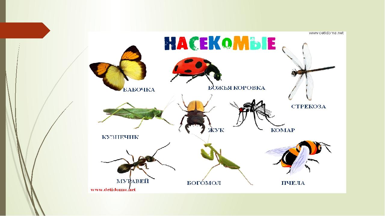 школьных вредные и полезные насекомые с картинками скандала депутат чуть
