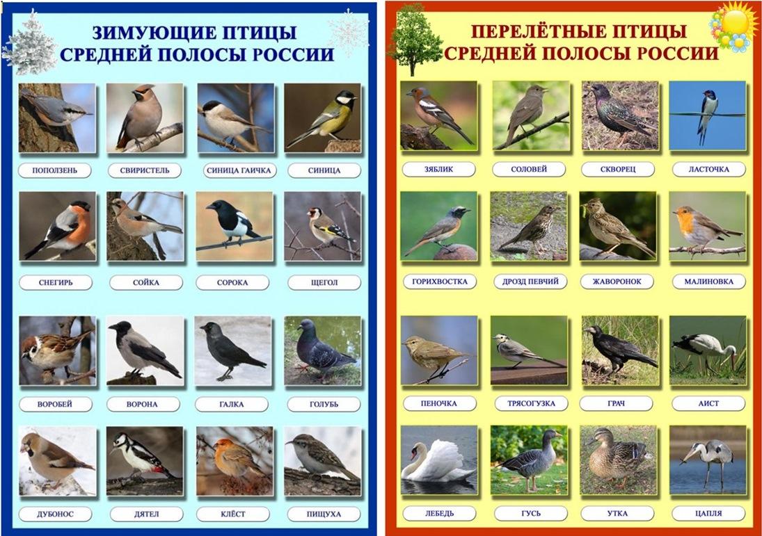 неперелетные птицы картинки с названиями