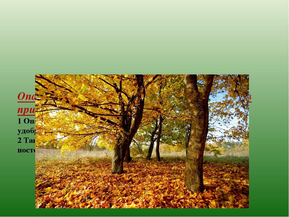 Опавшие листья имеют огромное значение в природе. 1 Опавшие листья – это цен...