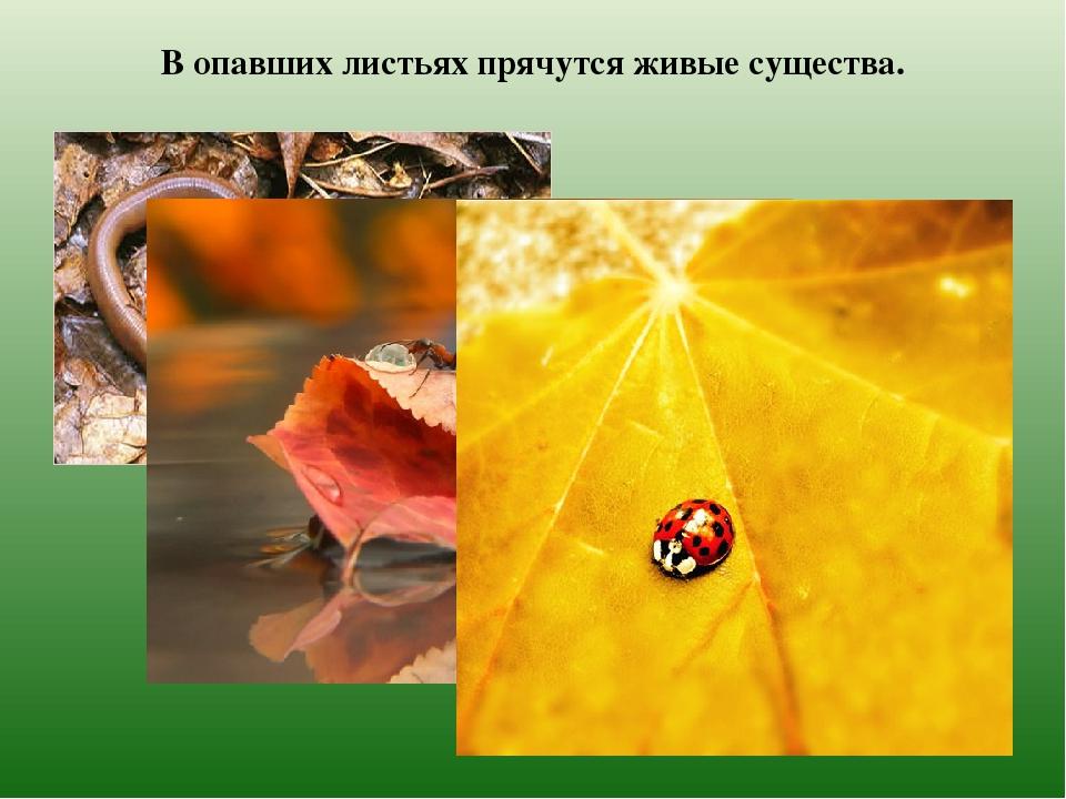 В опавших листьях прячутся живые существа.