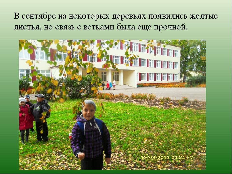 В сентябре на некоторых деревьях появились желтые листья, но связь с ветками...