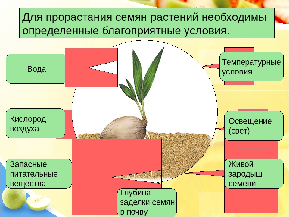 белые картинки на тему условия прорастания семян стремится