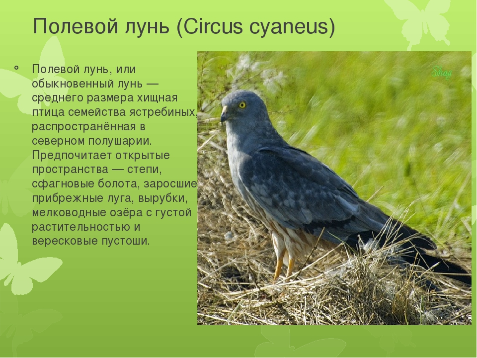 хищные птицы саратовской области творчеством