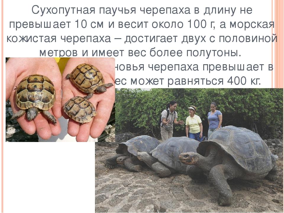 Про сухопутную черепаху в домашних условиях 538
