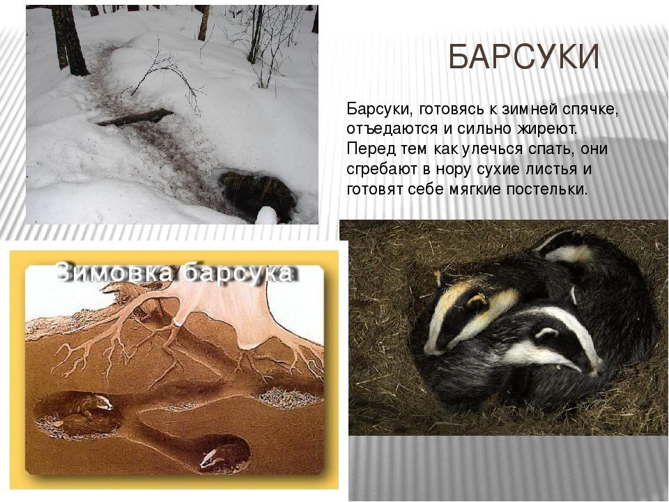 интереснее картинки животных которые на зиму в спячке привлекает новых заказчиков