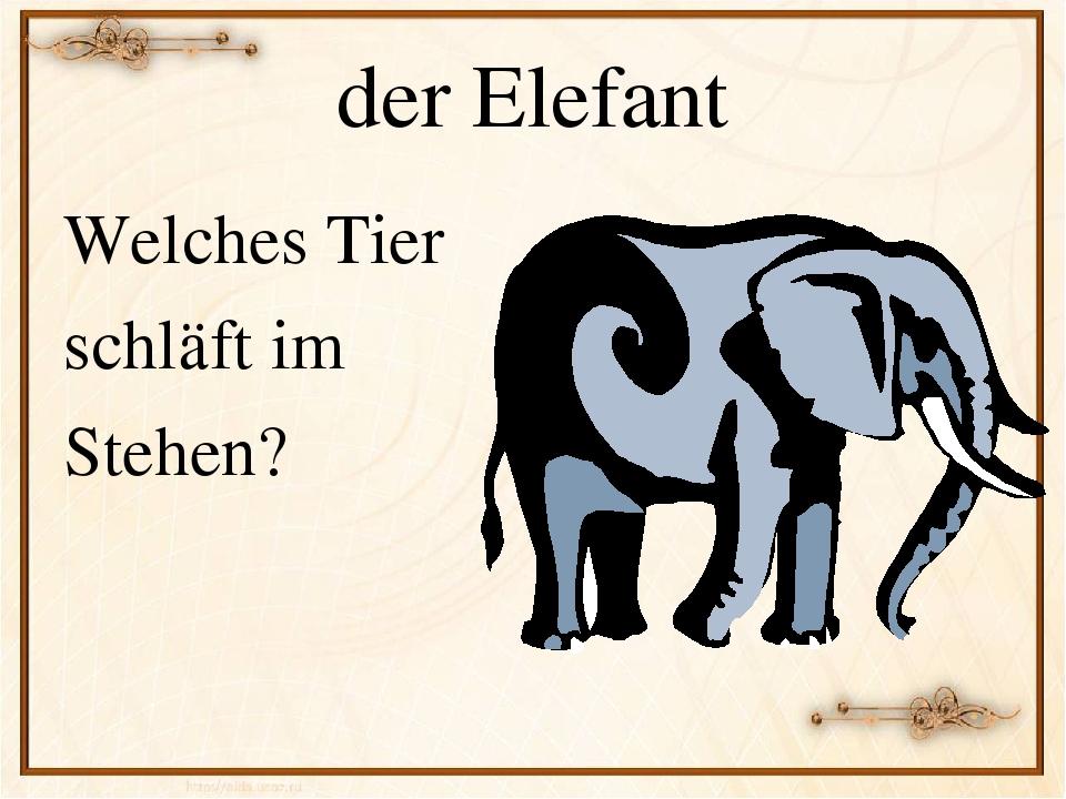 постер про животных на немецком летучие, пациент обращает