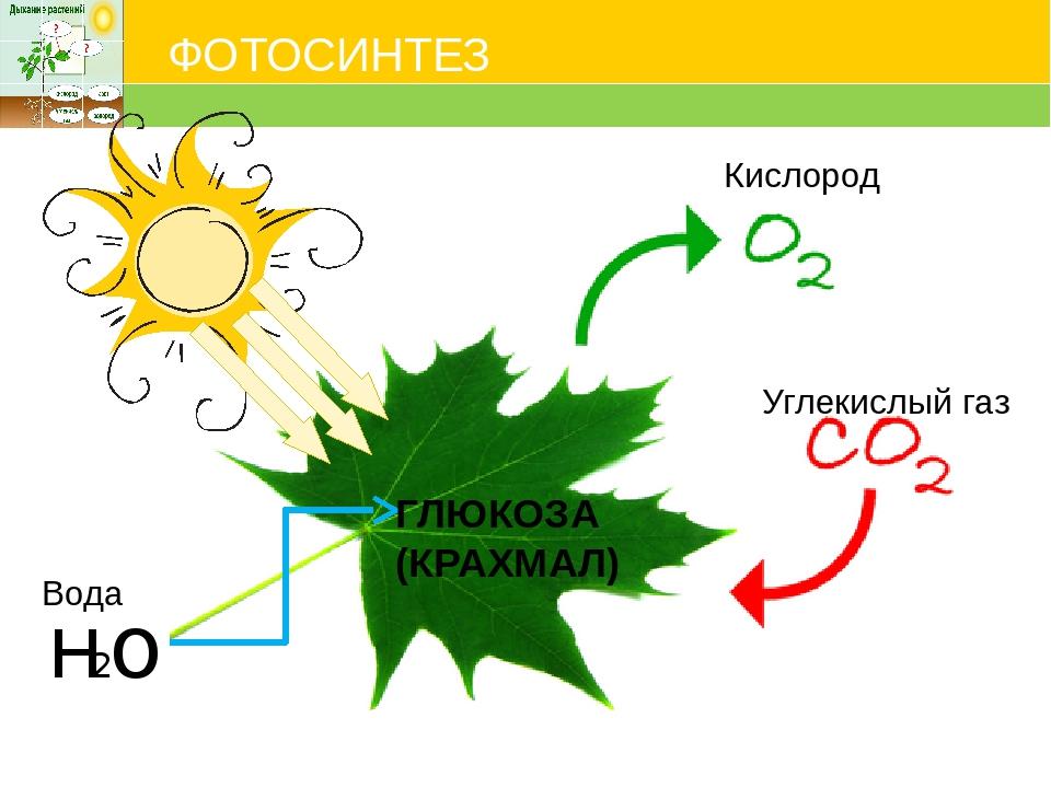 что нужно для фотосинтеза растений моде