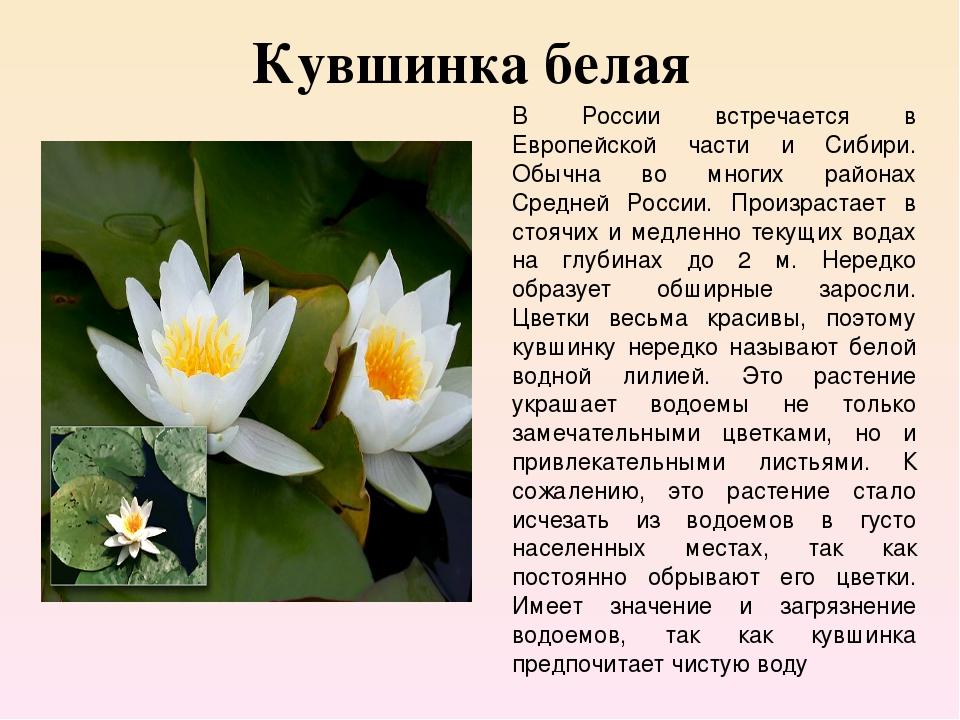 Страница красной книги россии с кувшинкой белой очень приятные