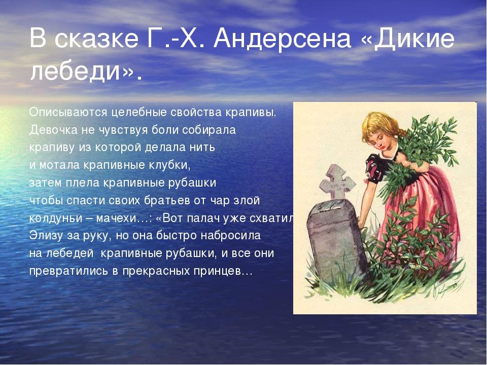 В сказке Г.-Х. Андерсена «Дикие лебеди». Описываются целебные свойства крапив...