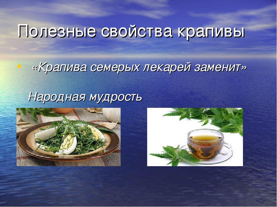 Полезные свойства крапивы «Крапива семерых лекарей заменит» Народная мудрость