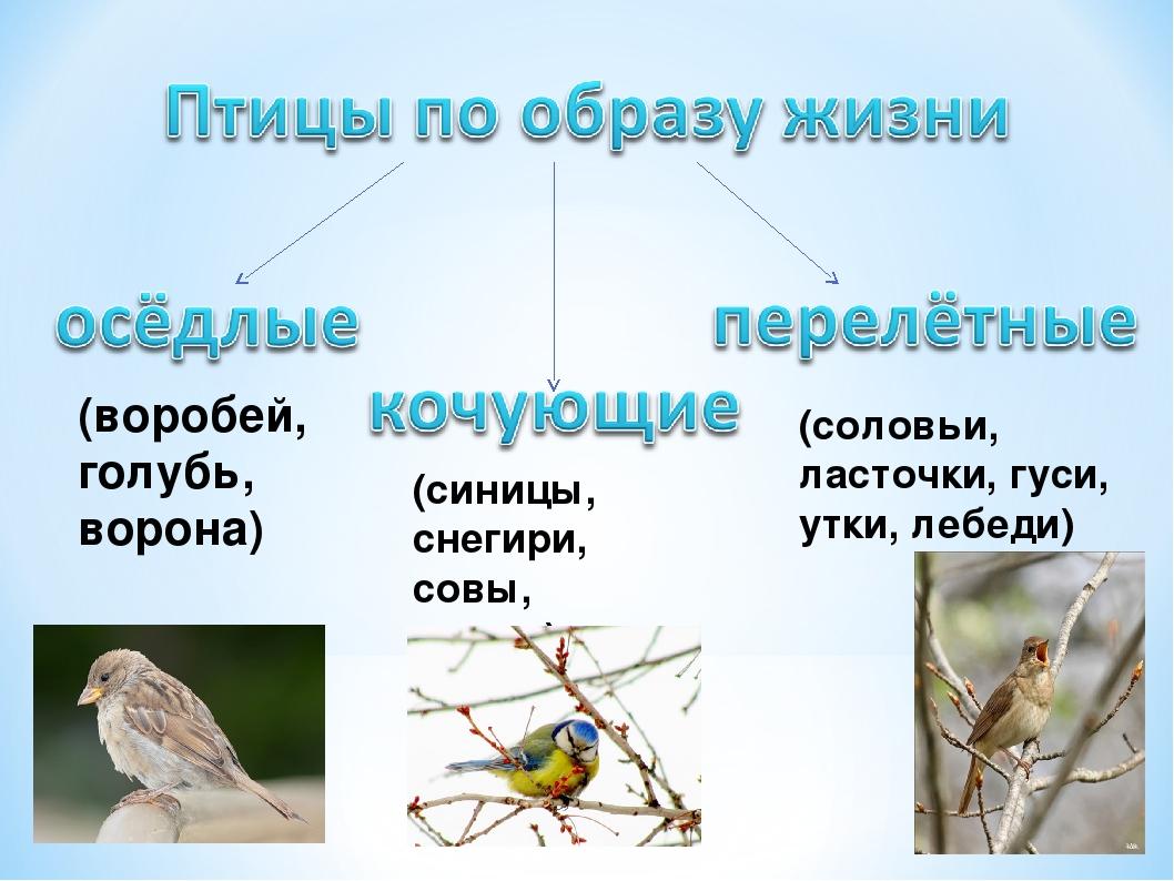 (воробей, голубь, ворона) (синицы, снегири, совы, дятлы) (соловьи, ласточки,...