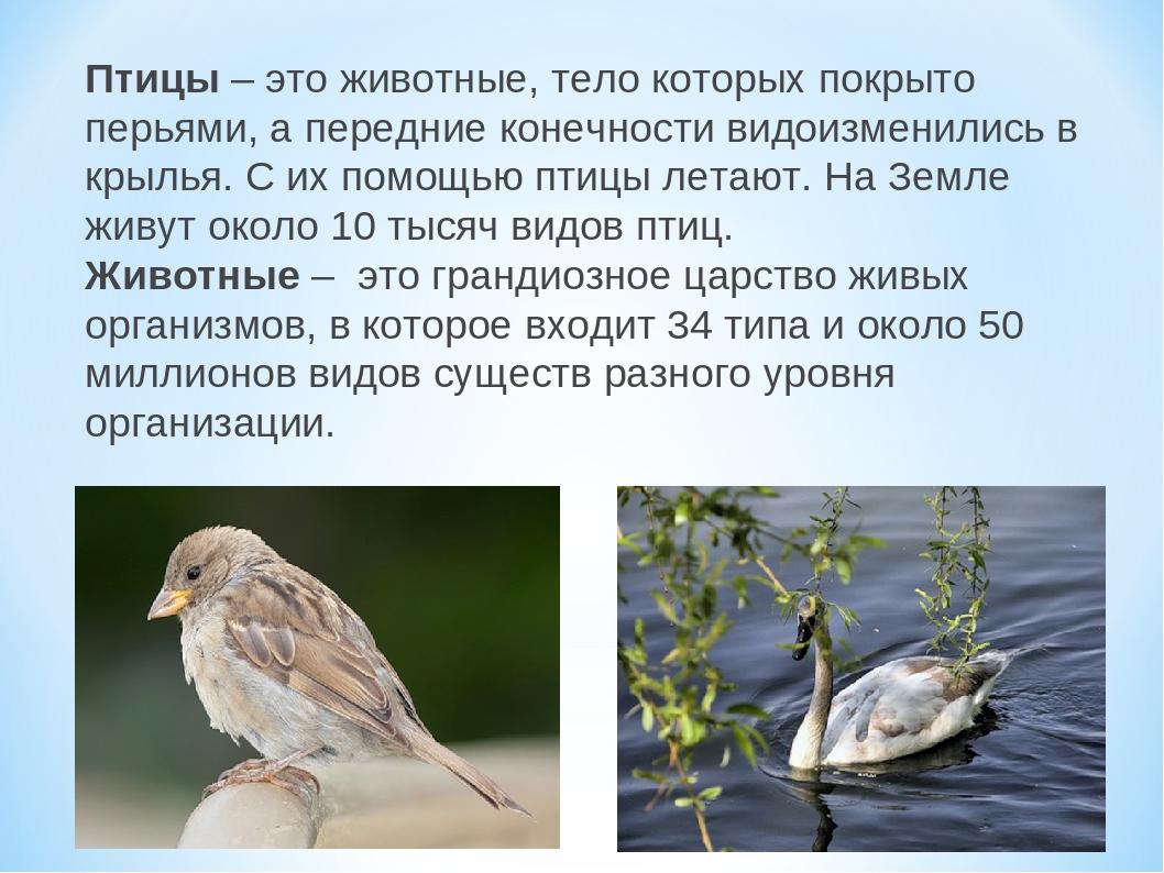 Птицы– это животные, тело которых покрыто перьями, а передние конечности вид...