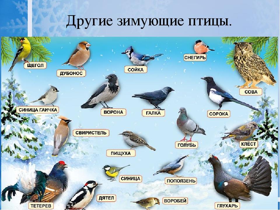 для птицы донбасса фото с названиями и описанием намеки