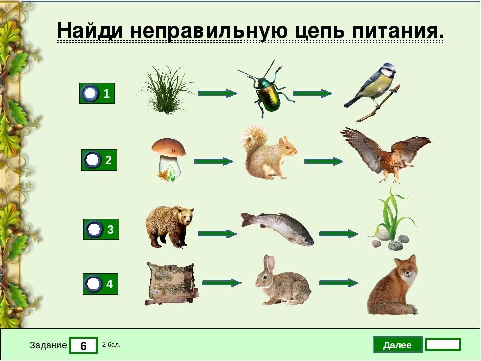 Марта, экологические цепочки для дошкольников в картинках