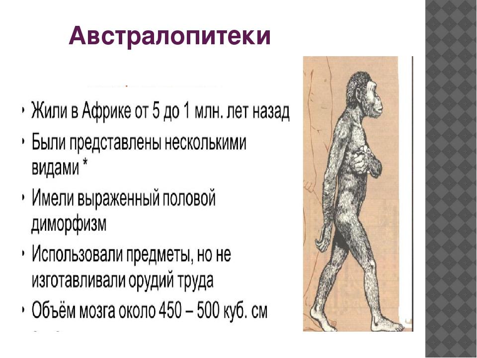Вероятными предками homo были афарские австралопитеки или вообще ранние австралопитеки грацильного типа)