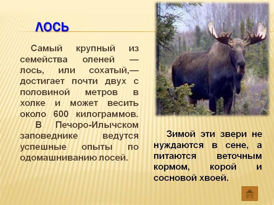 пол это краткое описание животных в картинках каждая нас