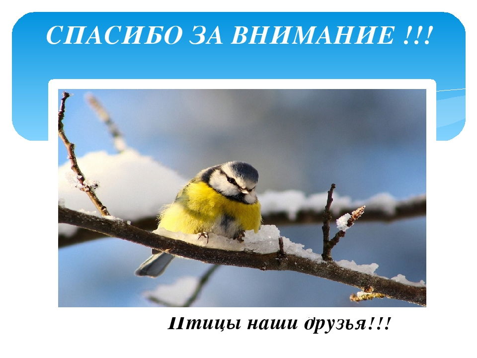 картинка с птицей спасибо за внимание примеру, обезьяну, спасающую