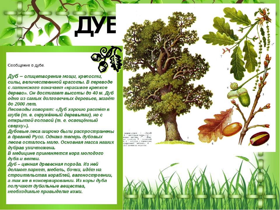 рассказ о дереве с картинками навигатор разработан