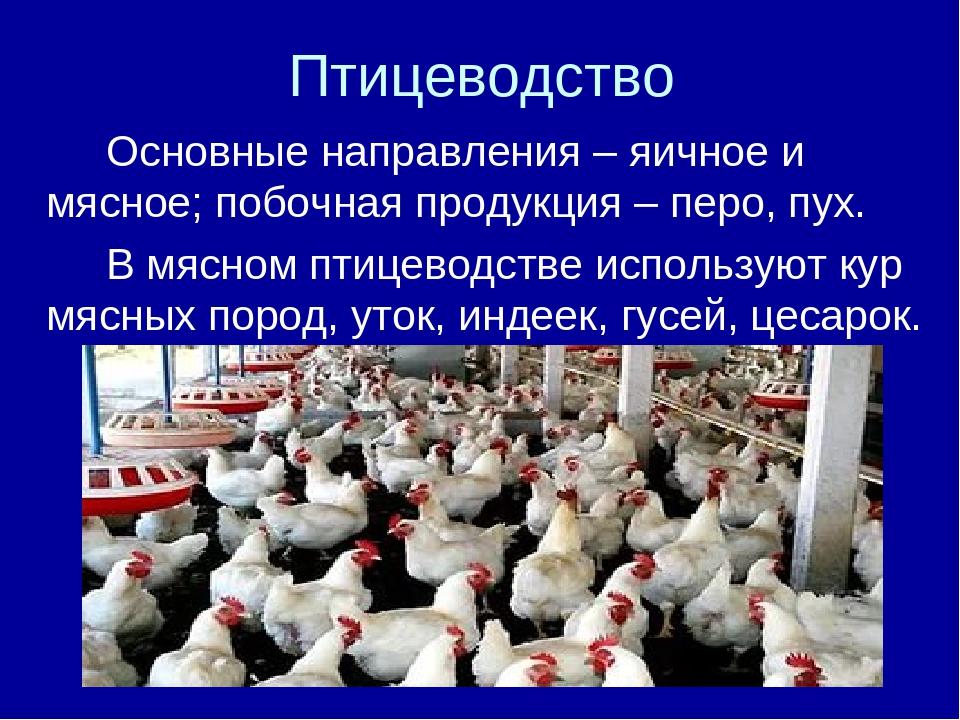 Птицеводство Основные направления – яичное и мясное; побочная продукция – п...